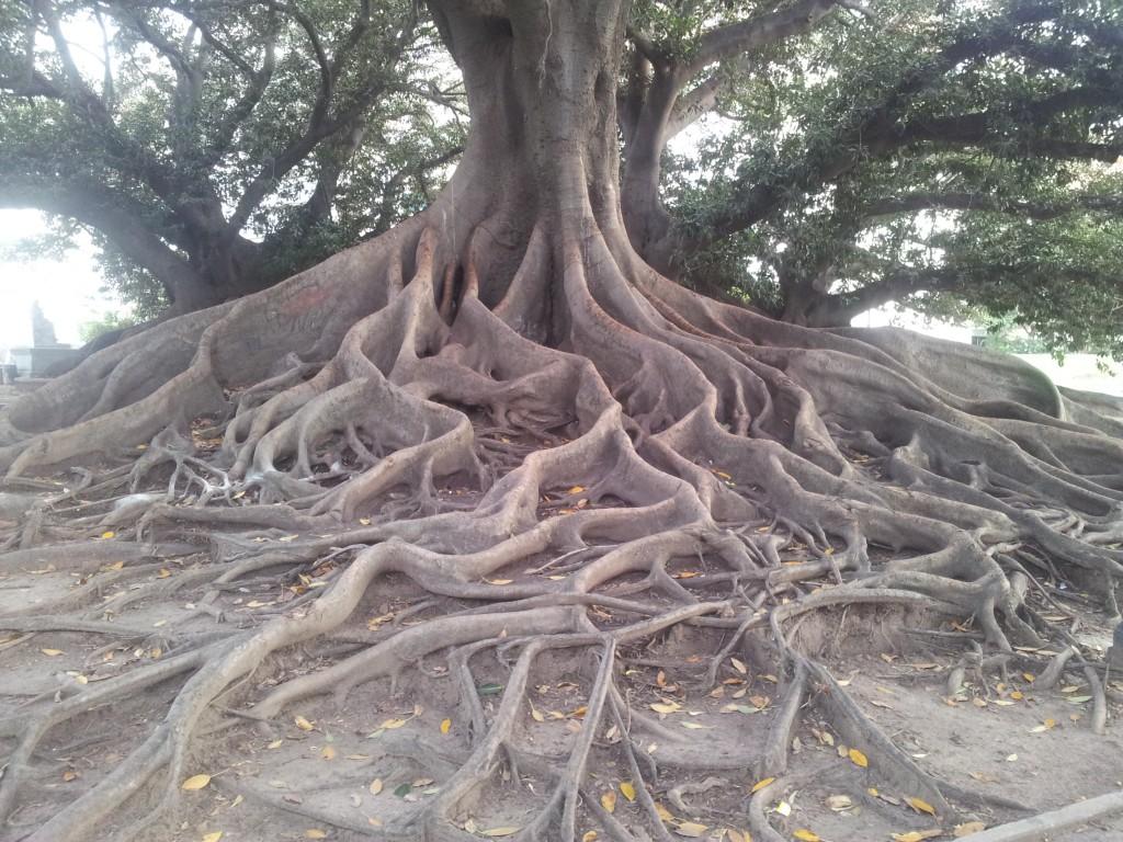 .... ja sellised puud ja nende juured!