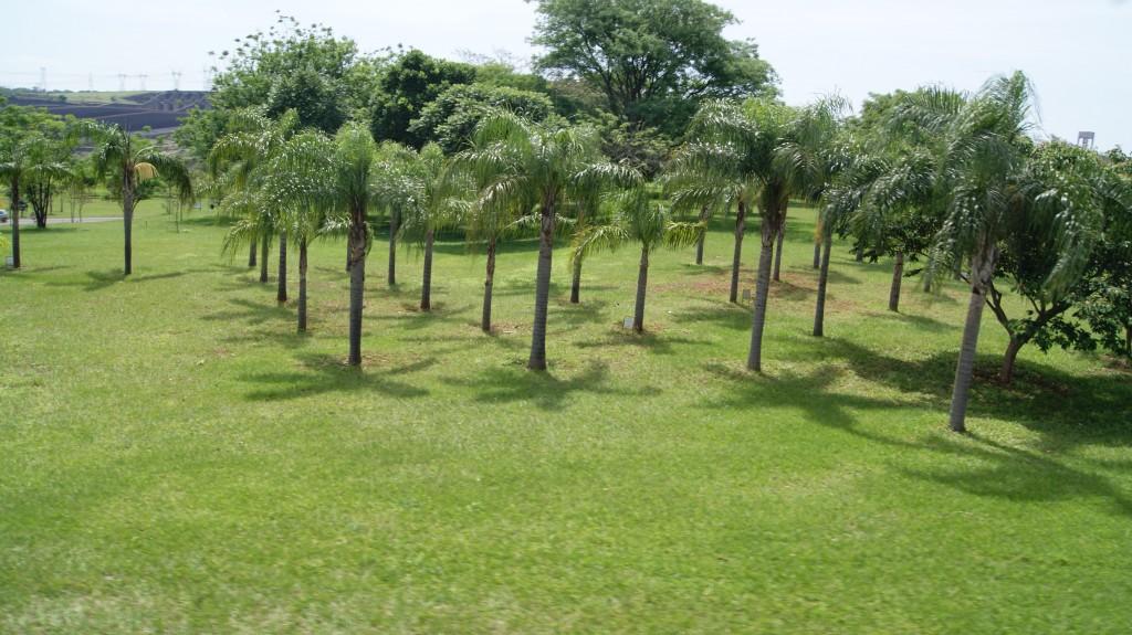 ... kes pensionile sai, võis istuda omanimelise puu siia territooriumile!